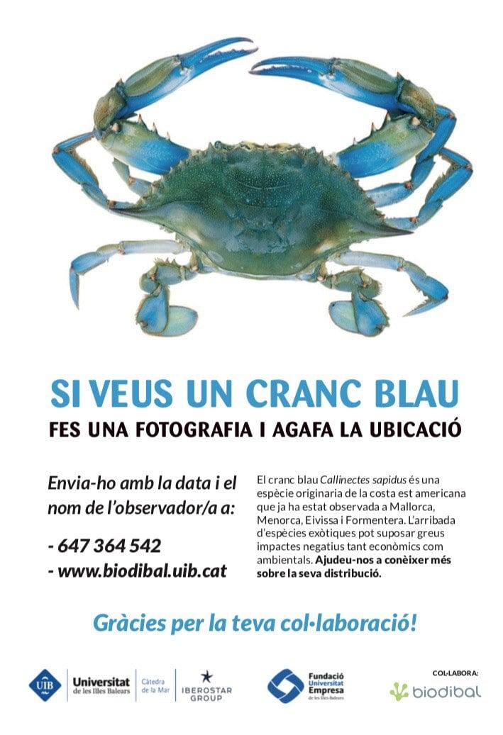 cranc-blau